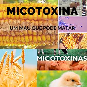 Saiba o que são micotoxinas, onde são comumente encontradas