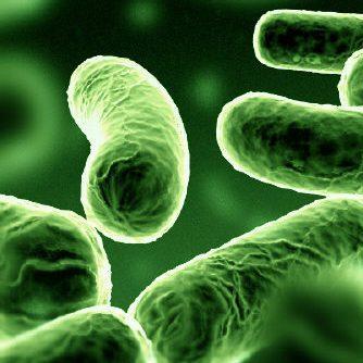 Você sabe o que são probióticos?
