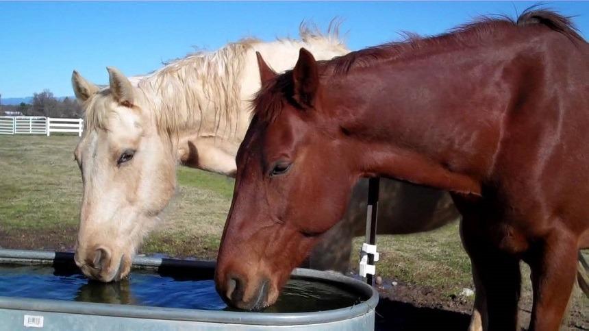 A importância da água para os equinos