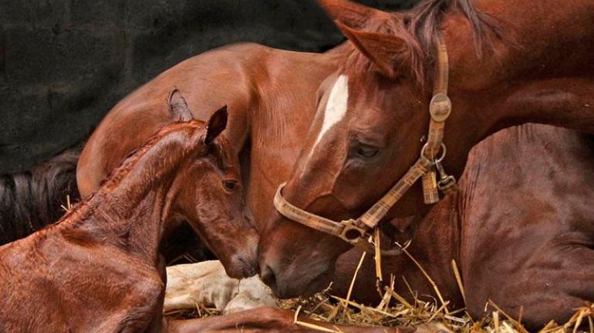 Como devo tratar minha égua recém parida?O que faço para garantir a saúde do potro e a égua?