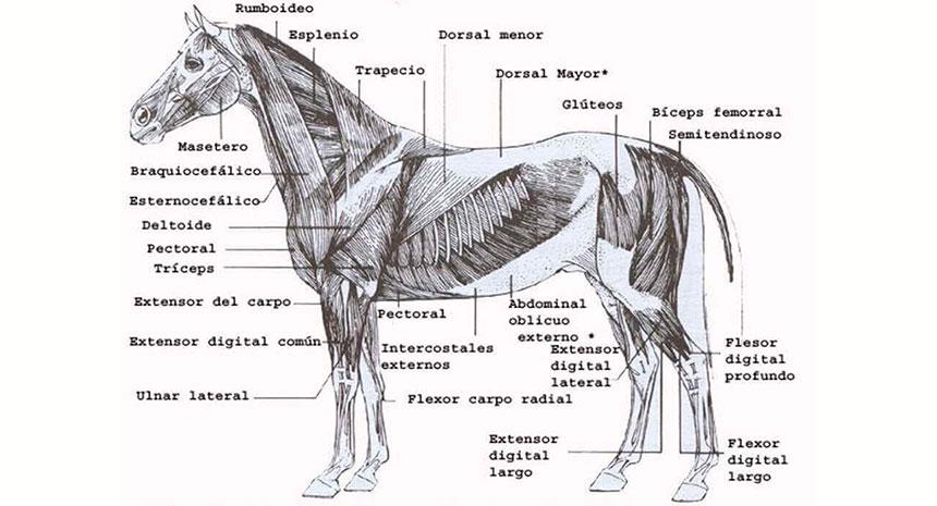 Entendendo para intervir. Saiba como o óxido de magnésio pode ajudar seu cavalo...