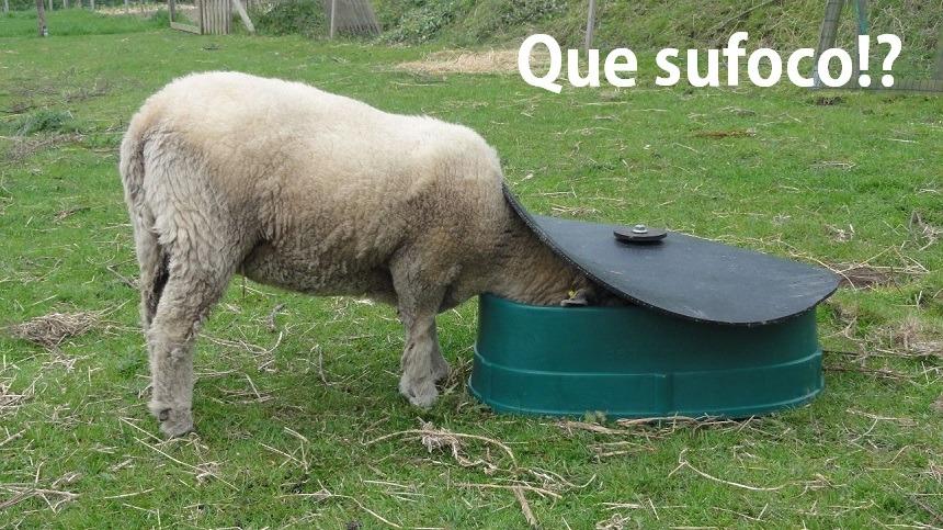 Importância, e como mineralizar os ovinos e os caprinos