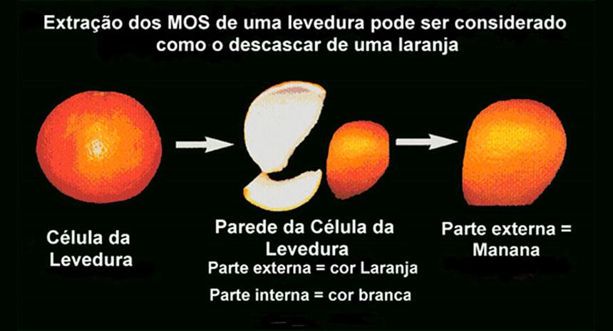 O que são os mananoligossacarídeos, e qual é sua função na nutrição?