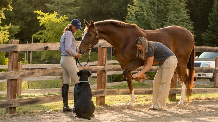 Por que fazer um exame pré compra de um cavalo?