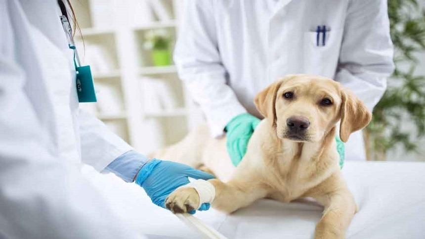 Por que o MOS Pet® é capaz de melhorar a imunidade do seu animal?
