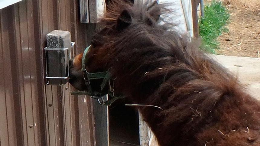 Porque o sal mineral para meu cavalo é tão importante?