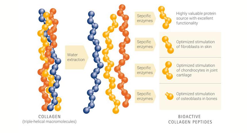 Qual a origem do COLAGENO Univittá e qual a sua especificação em Peptídeo Bioativo?