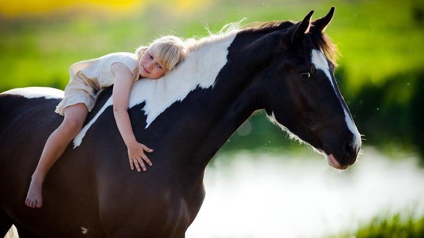 Saiba como aumentar a resistência e a qualidade de vida do seu animal.