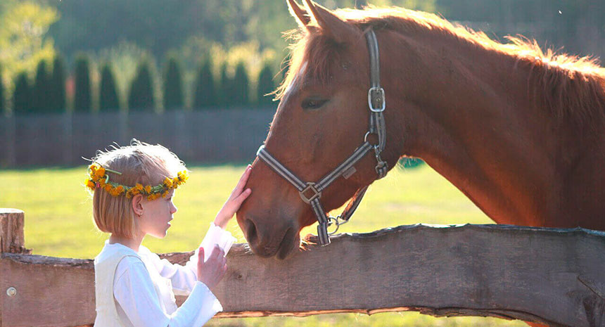 Saiba como o ProSacc pode contribuir para vida de seu cavalo...