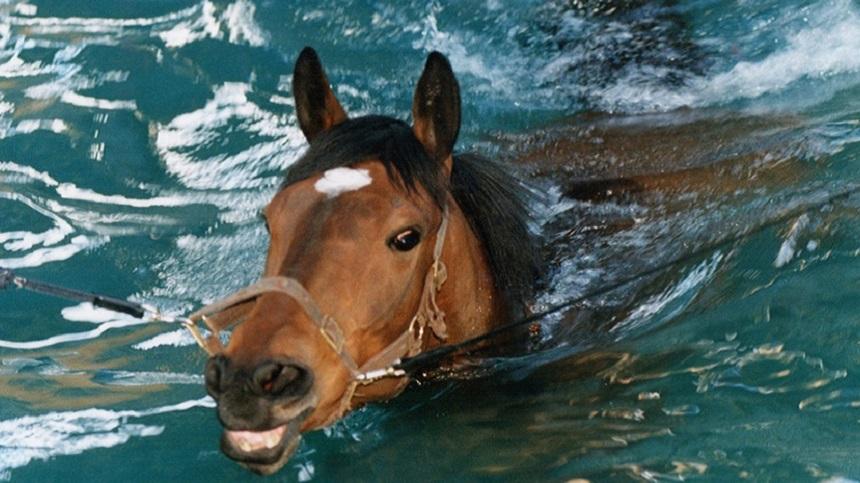 Saiba mais sobre a importância do exercício físico para seu cavalo