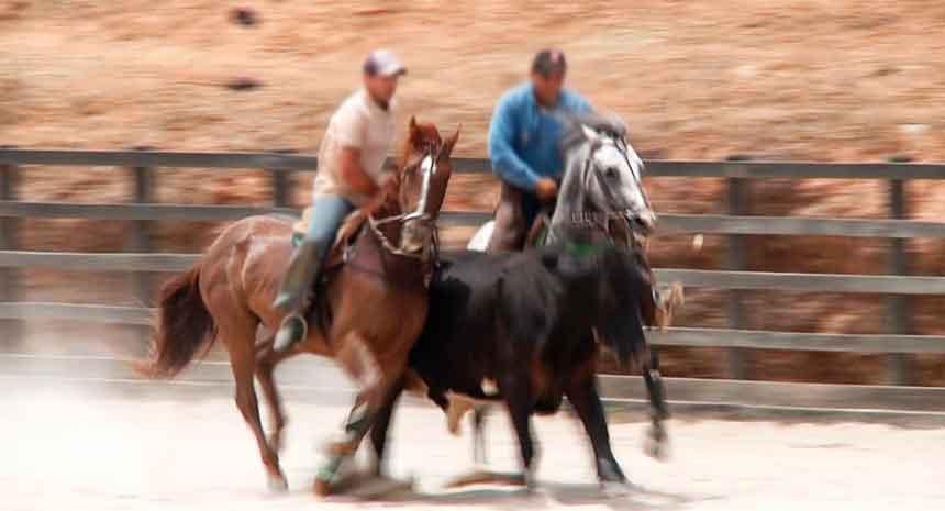 Suplementos para cavalos de vaquejada - Univittá