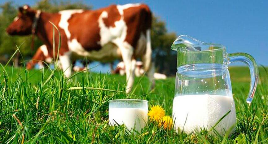 Uso de Aditivos na Alimentação de Gado Leiteiro: Efeito na produção e qualidade do leite