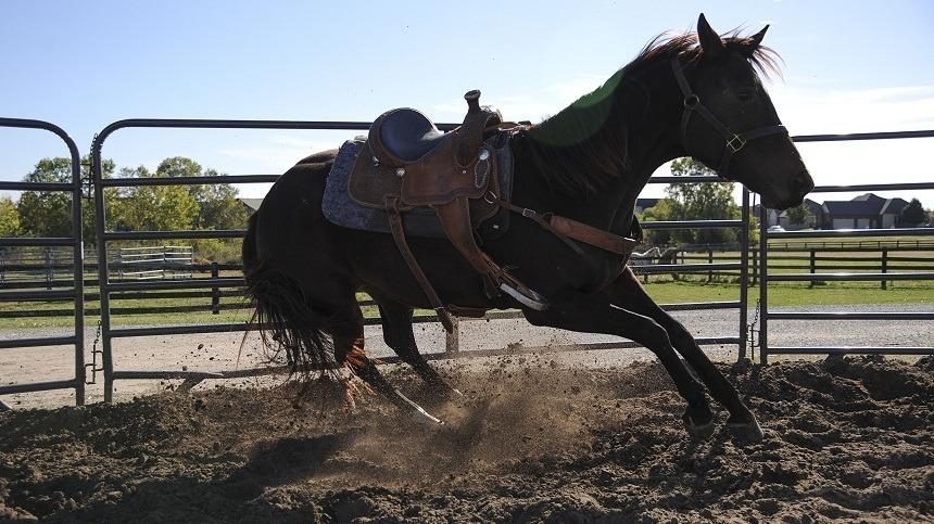 Overtraining: como identificar e lidar com cavalos com super treinamento